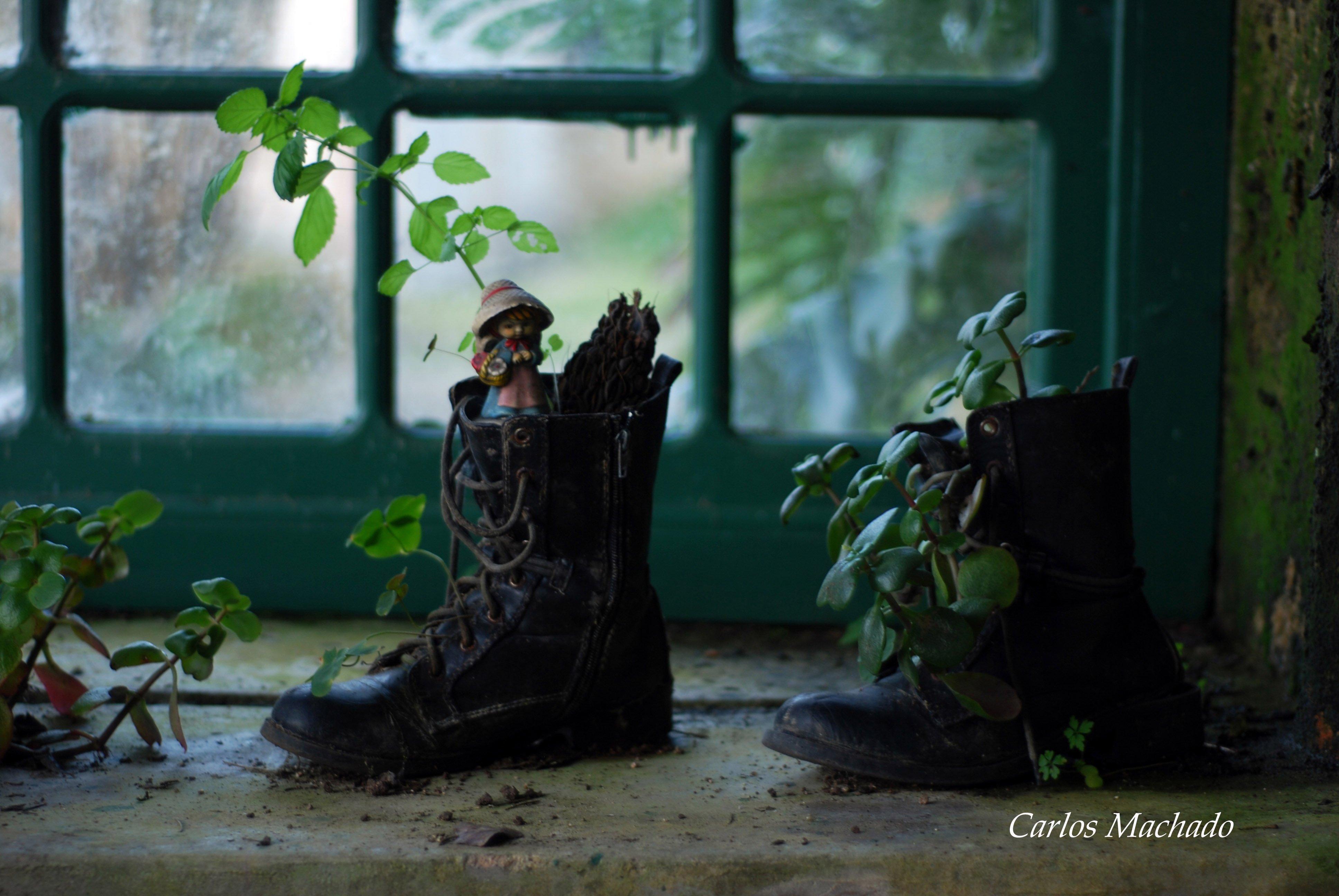 macro, nature, still life, other,, Carlos Machado
