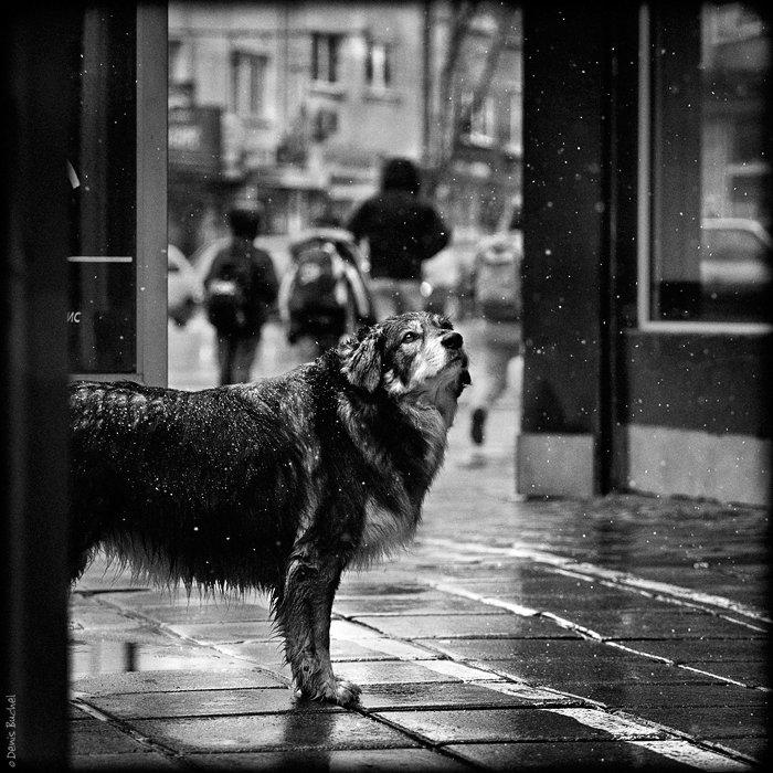 собака, Denis Buchel