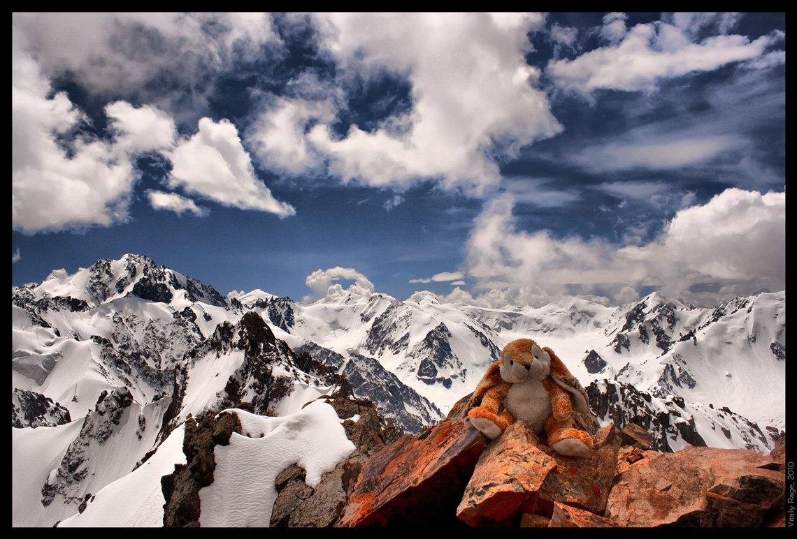 заяц, напарник, горы, казахстан, пик, облака, свобода, стихия, Vitaliy Rage