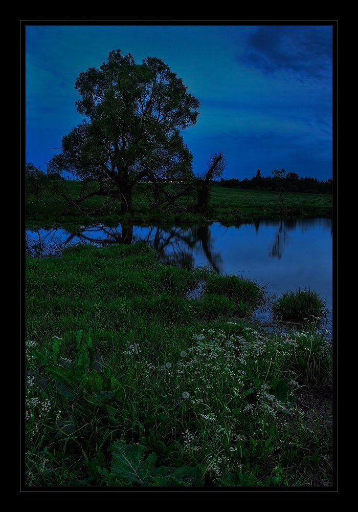 вечер, пруд, трава, дерево, пейзаж, лето, Oleg Dmitriev