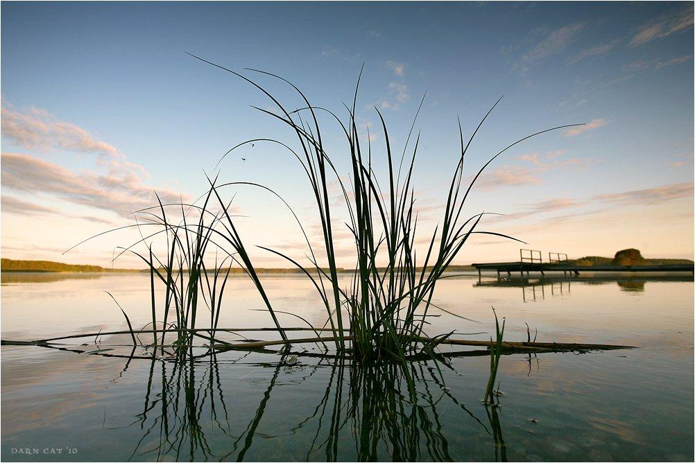 финляндия, утро, трава, рассвет, озеро, причал, два, комара, Darn Cat