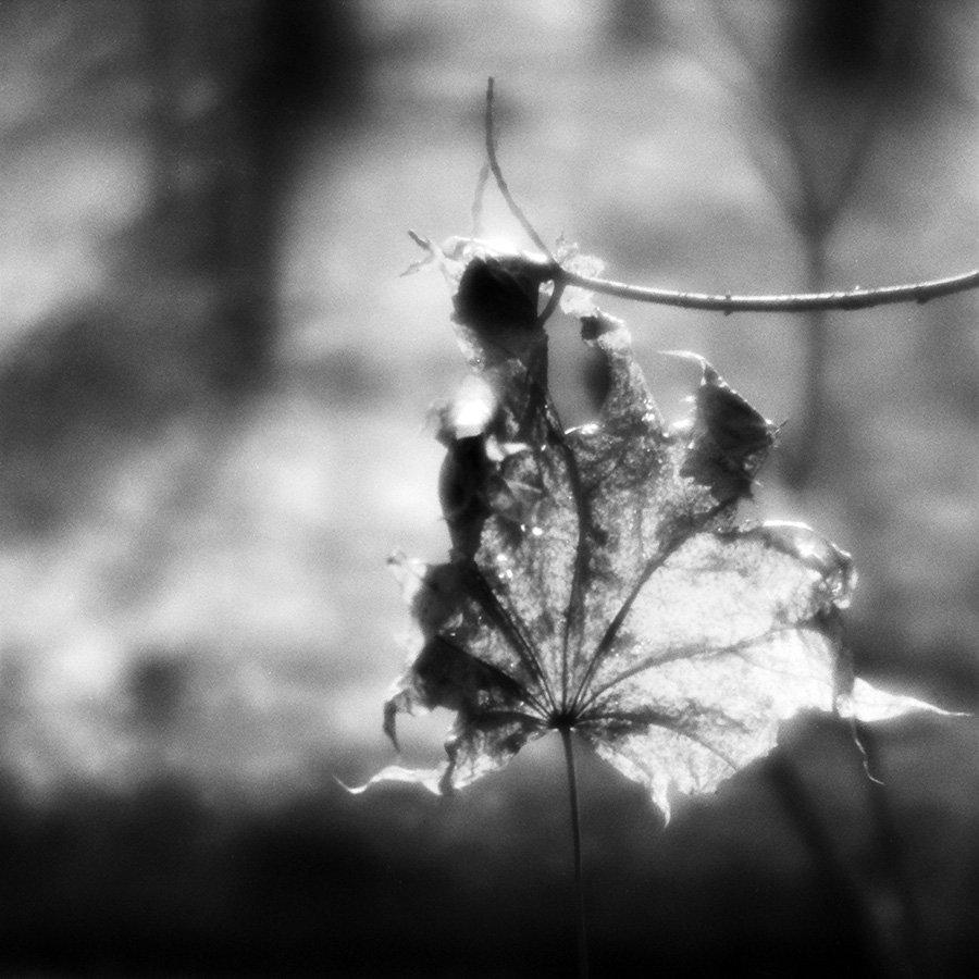 осень, лист, свет, Сергей Пестерев