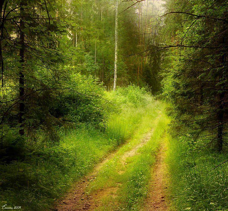 природа, лес, утро, волшебство, красота, свет, цвет, свежесть, пейзаж, тропа, дорога, трава, загадка, подмосковье, етти