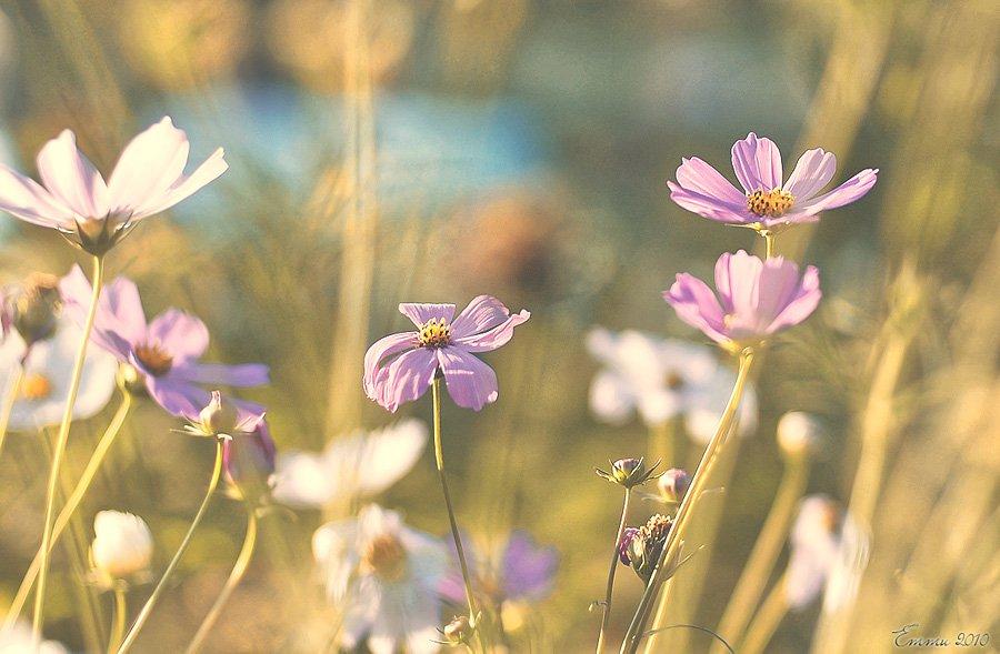 зарисовка, природа, цветы, етти