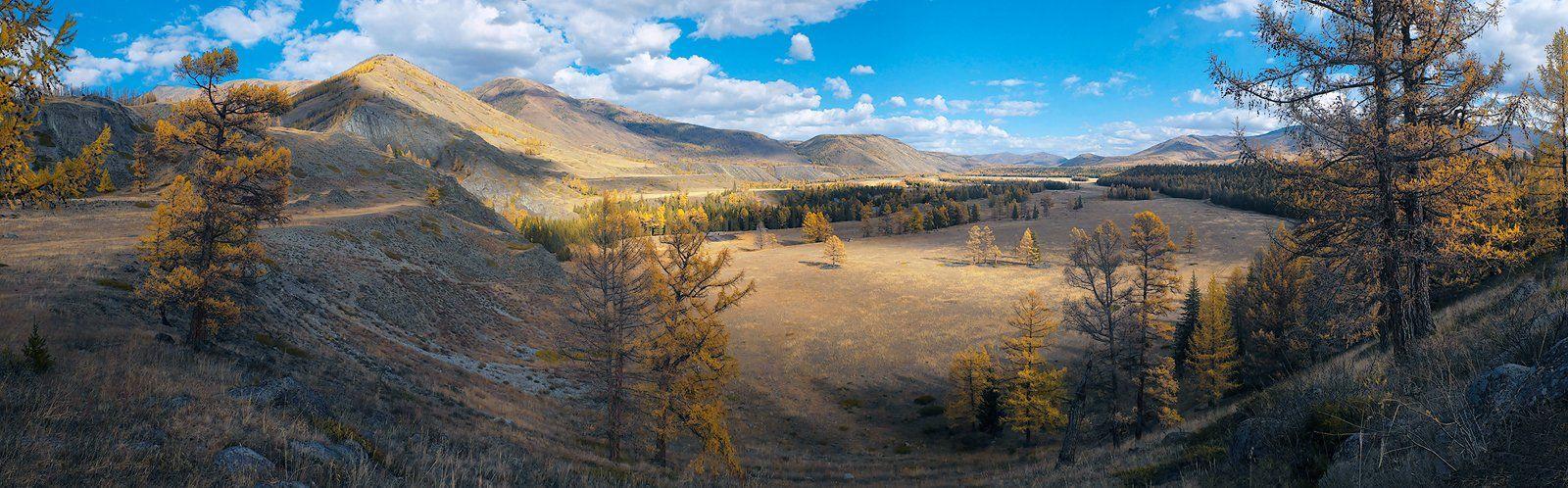 степь самаха, река, аргут, джазатор, осень, облака, тени, лиственницы, горный алтай, Валерий Пешков