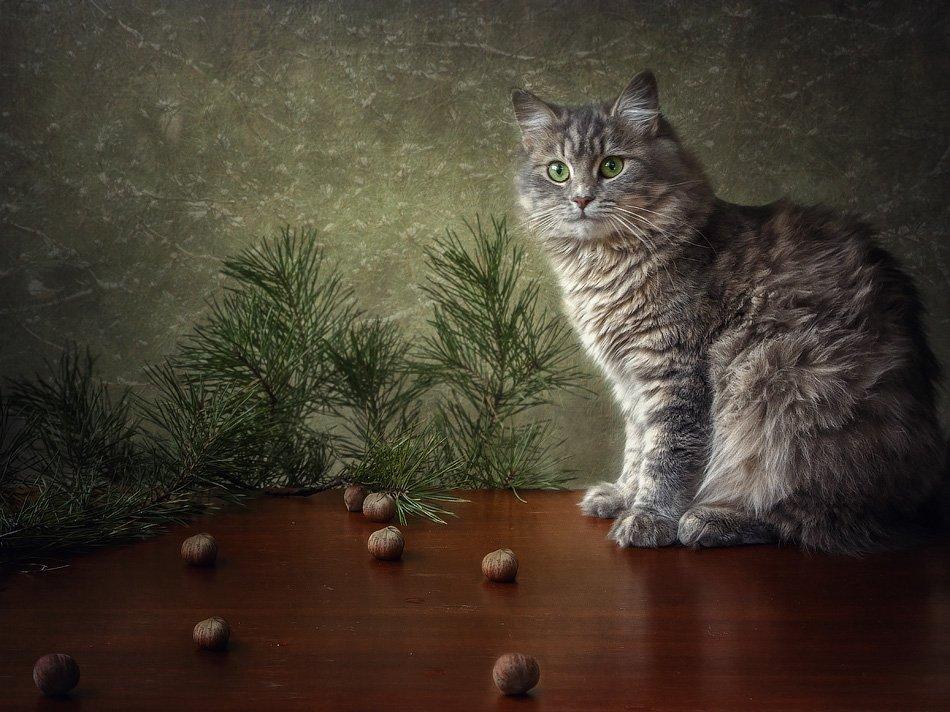 фото, кошка масяня, ветки сосны, лесные орехи, Ирина Приходько