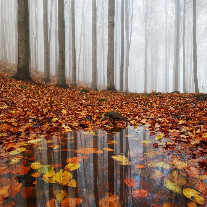 autumn, fall, light, fog, forest, mist, colors, czech republic, puddle, water, leaves, reflection, foliage, Martin Rak