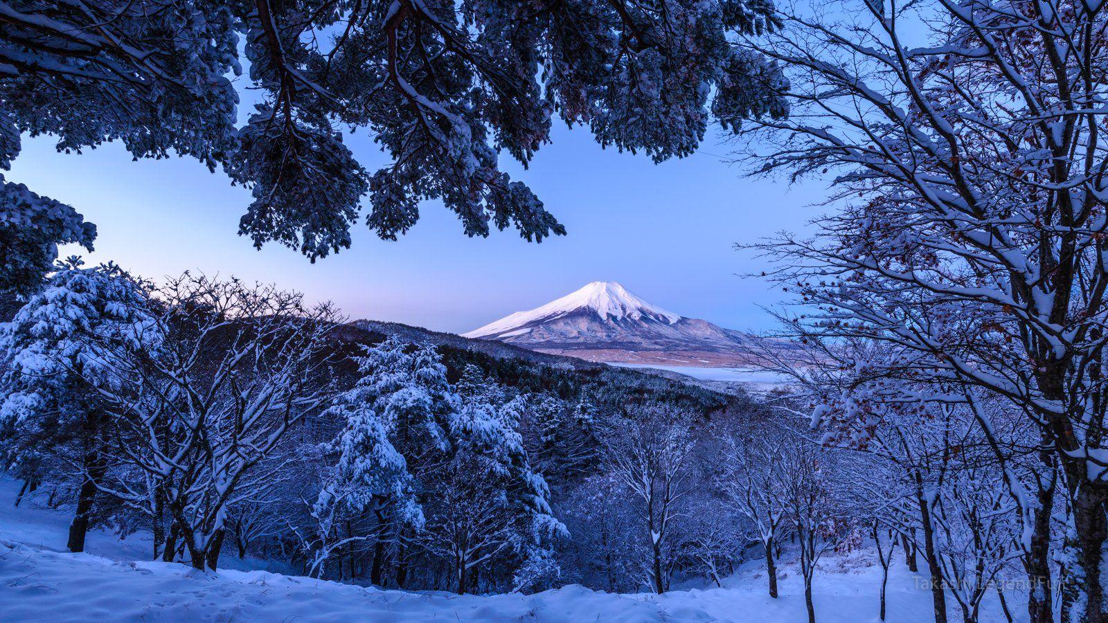 Fuji,mountain,Japan,snow,forest,tree,dawn,blue,morning,beautiful,landscape,, Takashi