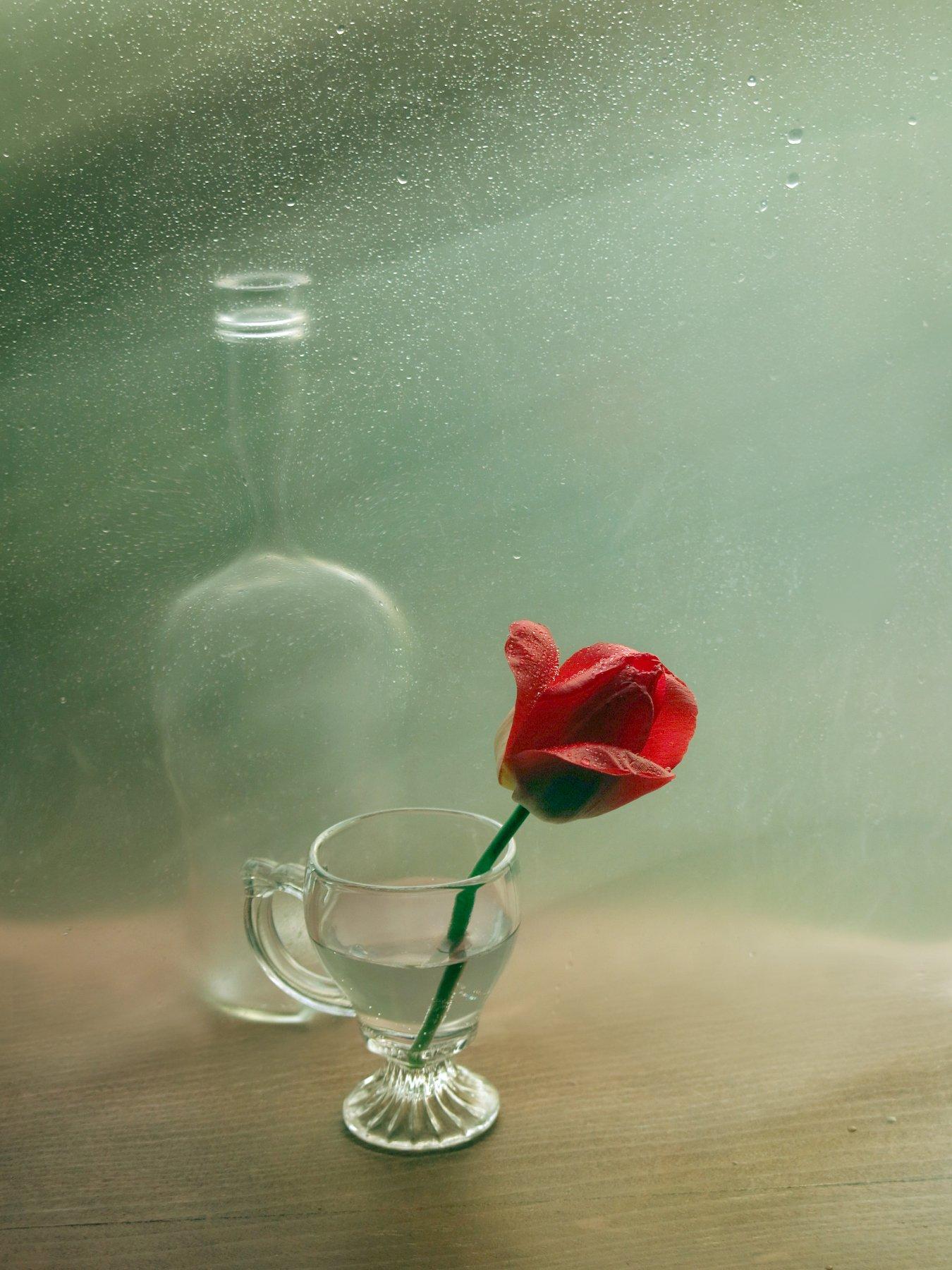 тюльпан, бутылка, капли, вода, натюрморт, Елена