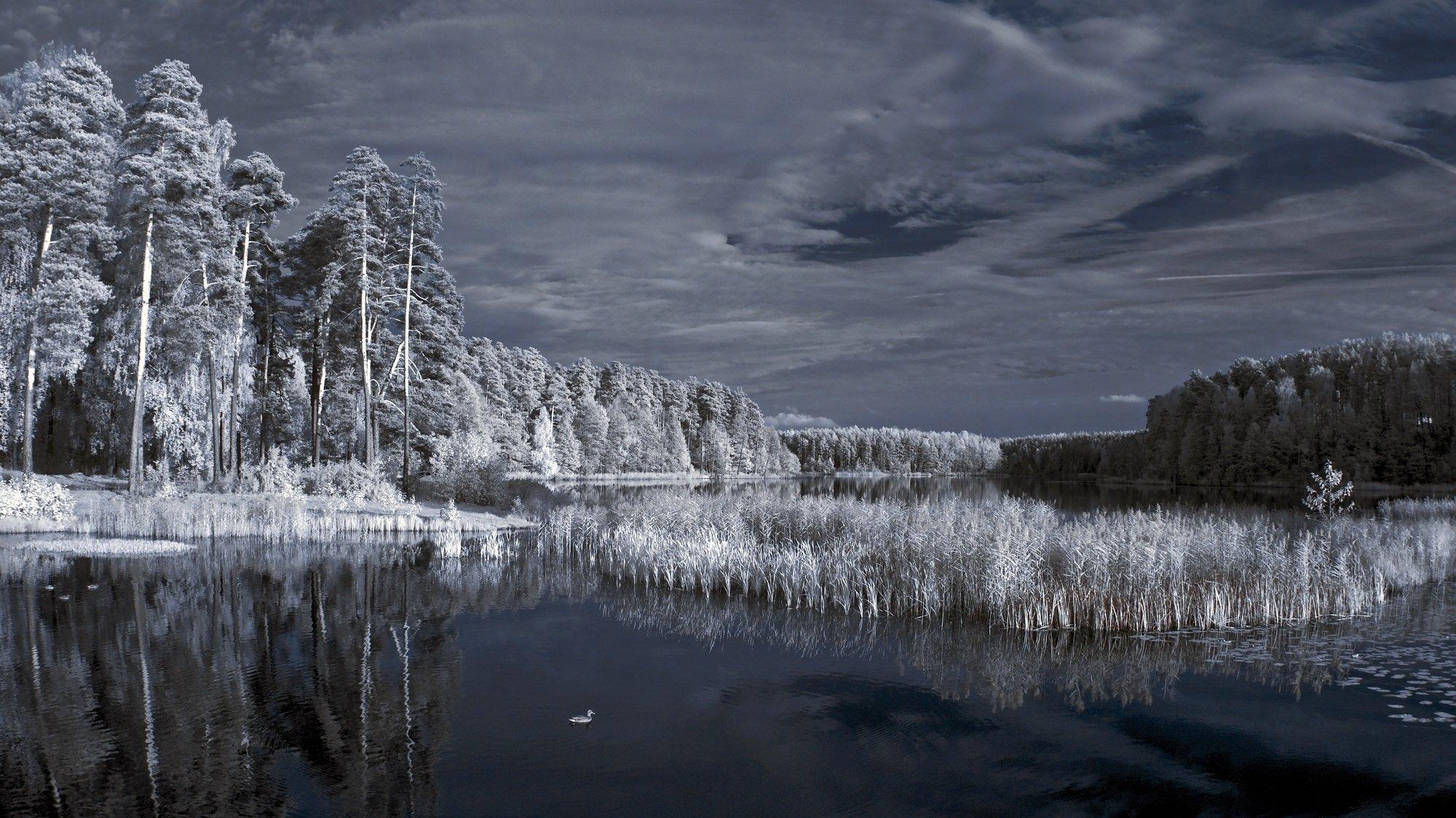 infrared,ик-фото,инфракрасное фото,инфракрасная фотография,пейзаж,природа,беларусь,осень, Sixten ( Сергей )