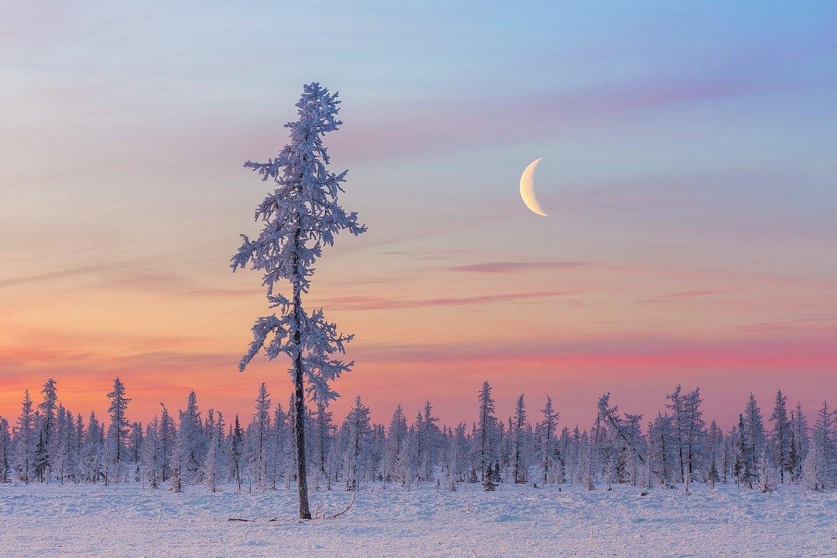 мороз, лесотундра, рассвет, зима, лиственница, сумерки, ямал, урал, россия, пейзаж, крайний север, dawn, frost, taiga, twilight, yamal, urals, russia, landscape, far north, Кирилл Уютнов