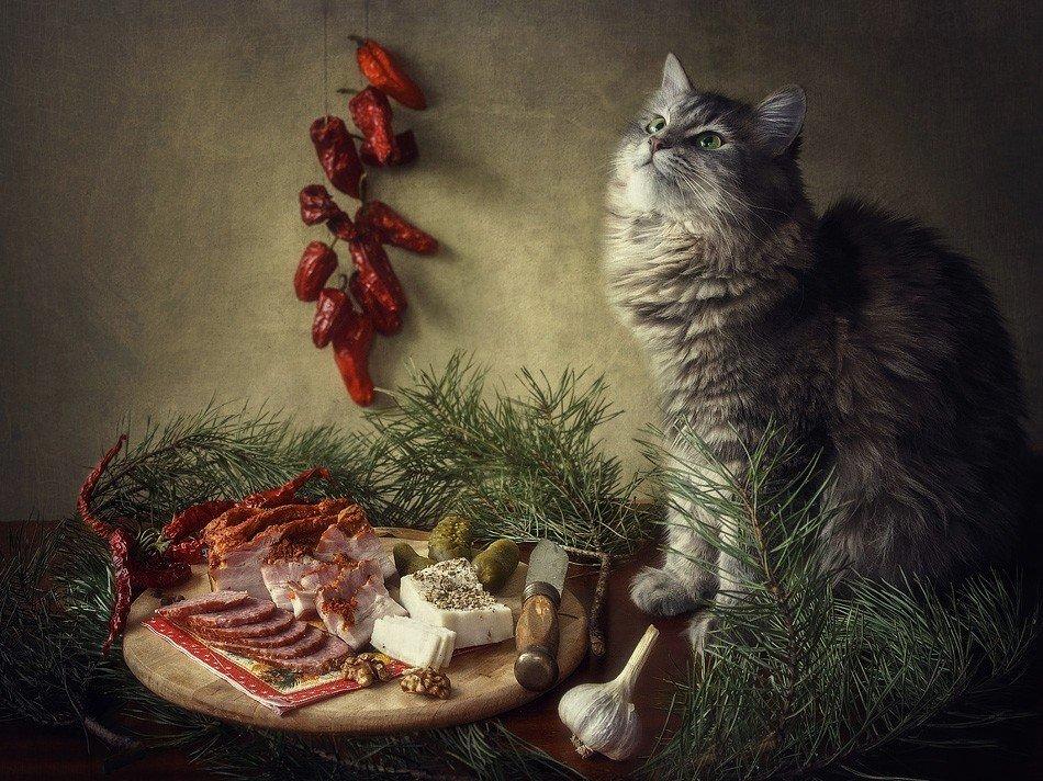 фото, кошка масяня, ветки сосны, колбаса, грудинка, сало. перец, чеснок, Ирина Приходько