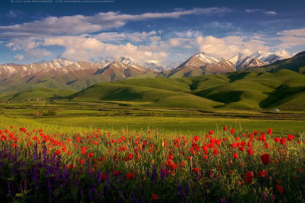 kyrgyzstan, kyrgyz, kg, bishkek, бишкек, киргизия, кыргызстан, маки, горы, lazy_vlad, Lazy Vlad