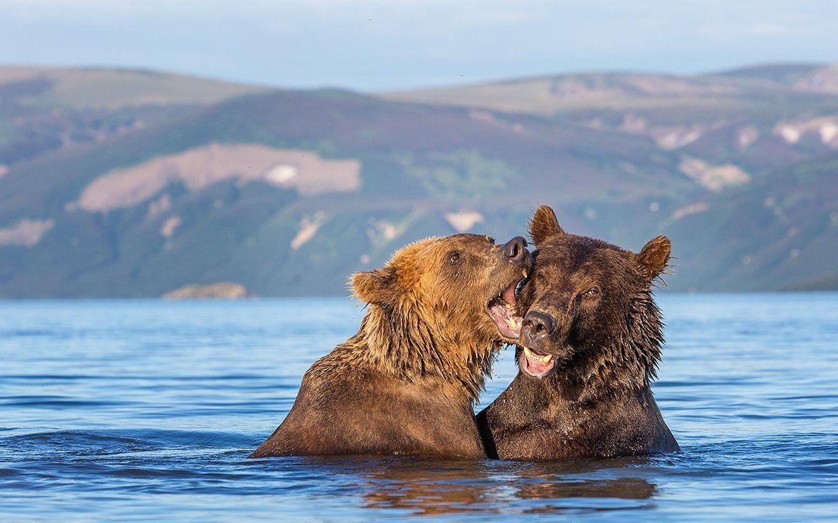 Камчатка, медведи, Власов Егор