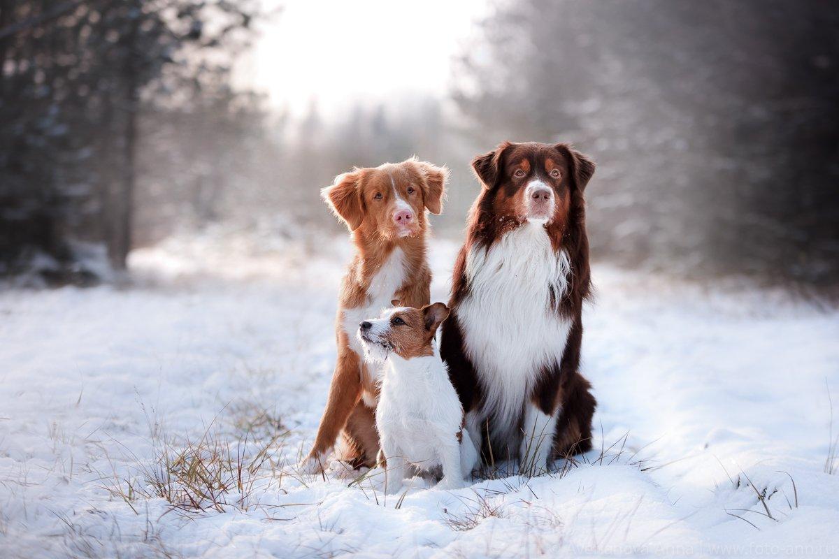 собаки, зима, дружба, Анна Аверьянова