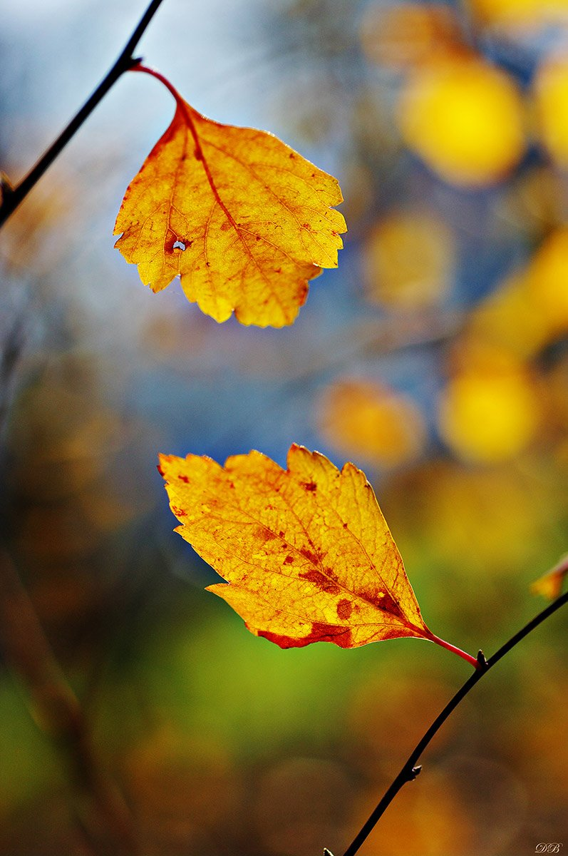 nature, leaf, leaves, brown, branch, color, colors, color image, image, photography, yellow, green, bokeh, macro, autumn,, Dr Didi Baev