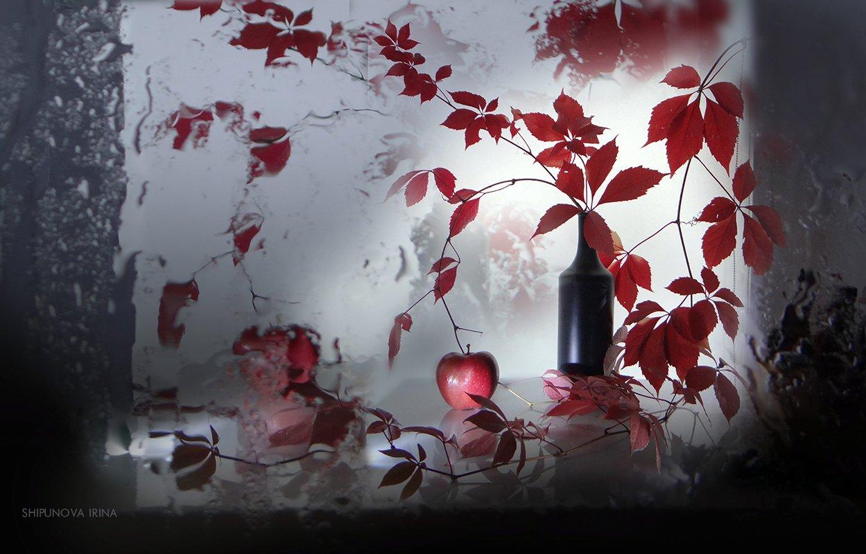 дикий девичий виноград бутыль яблоко отражение, Шипунова Ирина