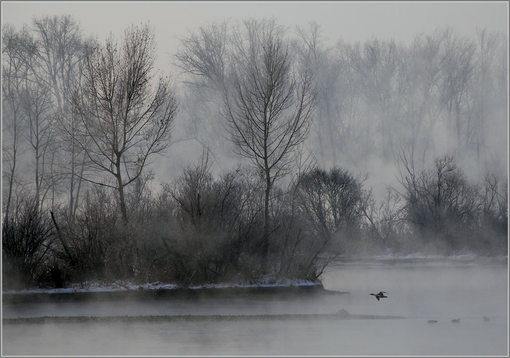 иртыш,зима, утки, Александр