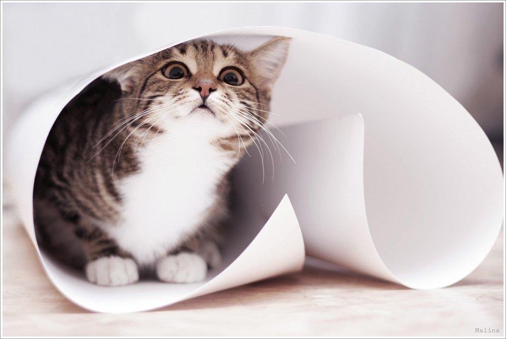 киса, кошка, ватман, газета, любопытность, игры, Алина Рафаловская