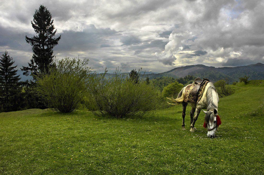 козлов артур, лошадь, карпаты, горы, пейзаж, Kozlov Artur