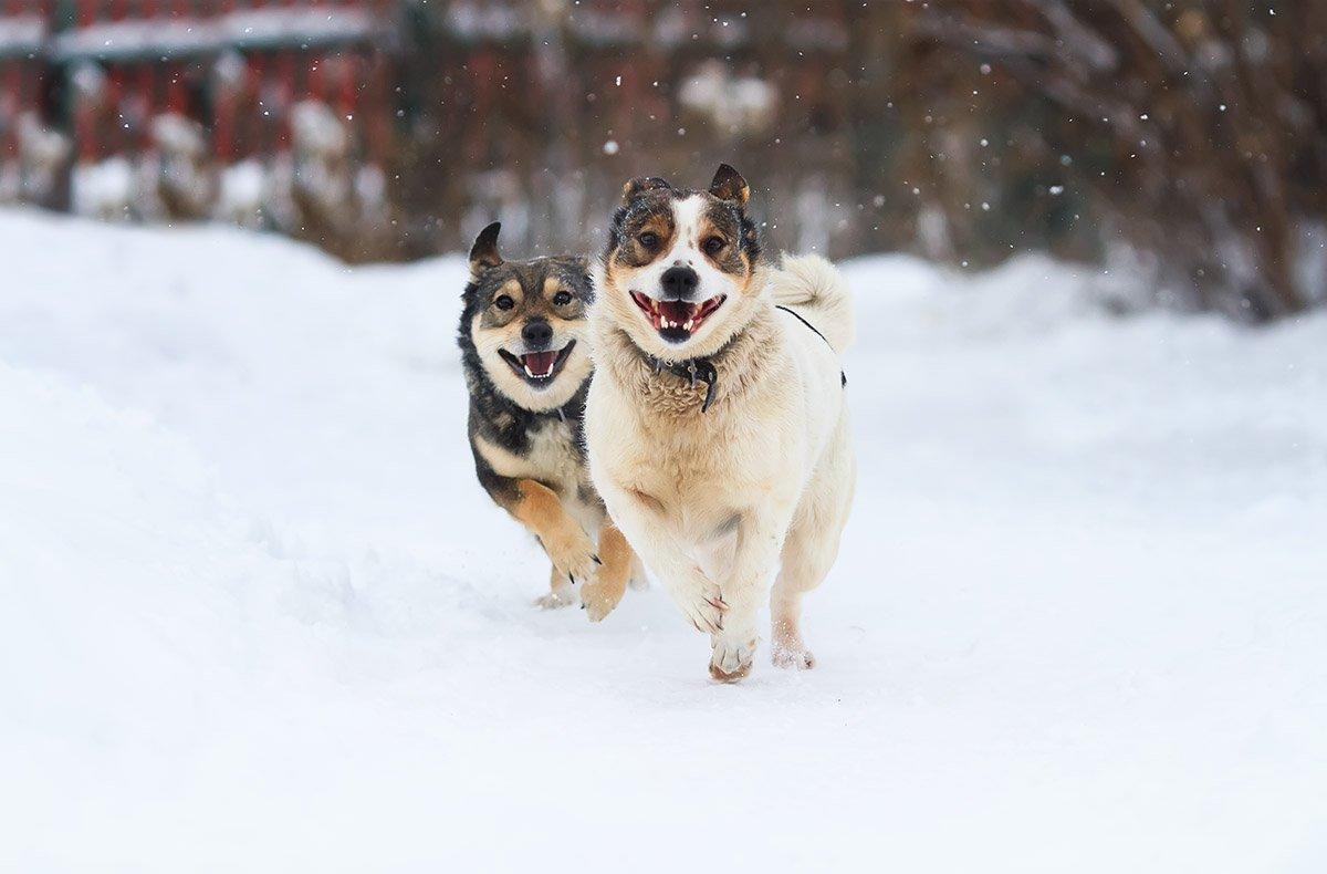 собаки, Наталья