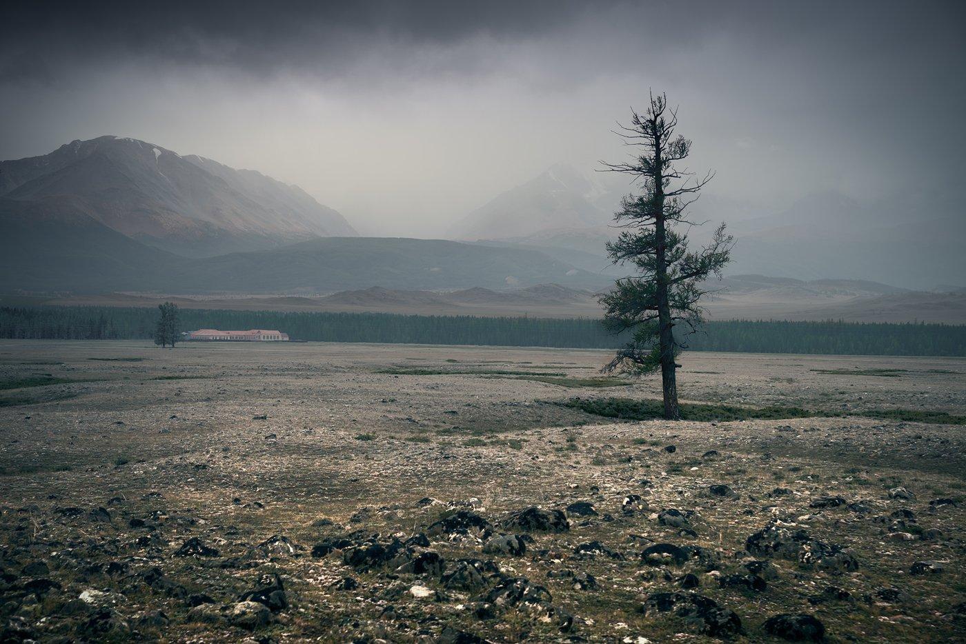 пейзаж, природа, горы, степь, долина, дерево, непогода, туман, облака, хмурый, хребет, вершины, большой, широкий, высокий, красивая, алтай, сибирь, россия, landscape, nature, mountains, steppe, valley, tree, bad weather, fog, clouds, gloomy, ridge, peaks,, Дмитрий Антипов
