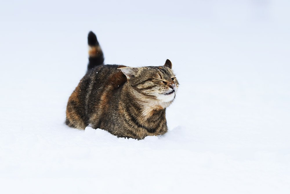 кошка, Наталья