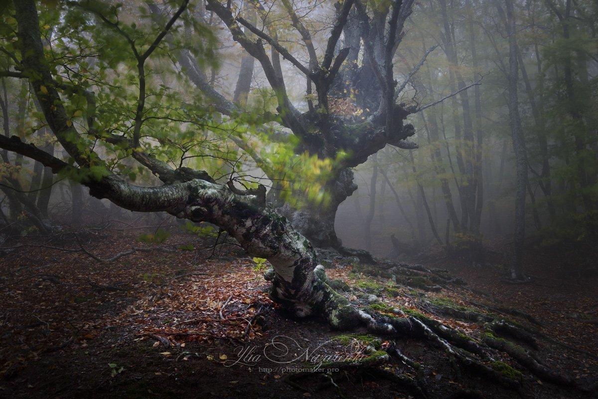 дерево, деревья, туман, дымка, осень, лес, свет, луч, woodland, tree, trees, forest, mystic, myctical, fog, mist, mood, чаща, autumn, мистика, сказка, образ,, Юлия Назаренко