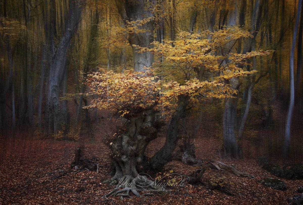 дерево, деревья, туман, дымка, осень, лес, woodland, tree, trees, forest, mystic, myctical, fog, mist, mood, чаща, autumn, мистика, сказка, образ,, Юлия Назаренко