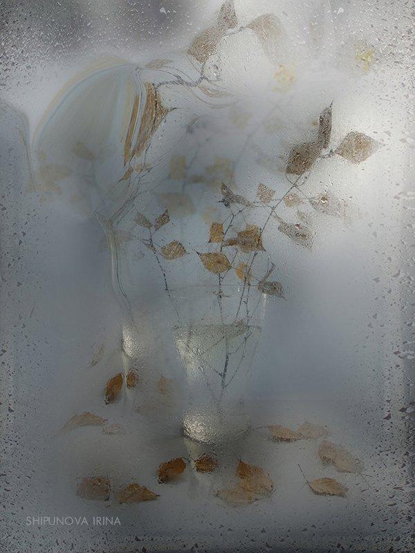 дождь осень стекло берёзовые листья капли, Шипунова Ирина