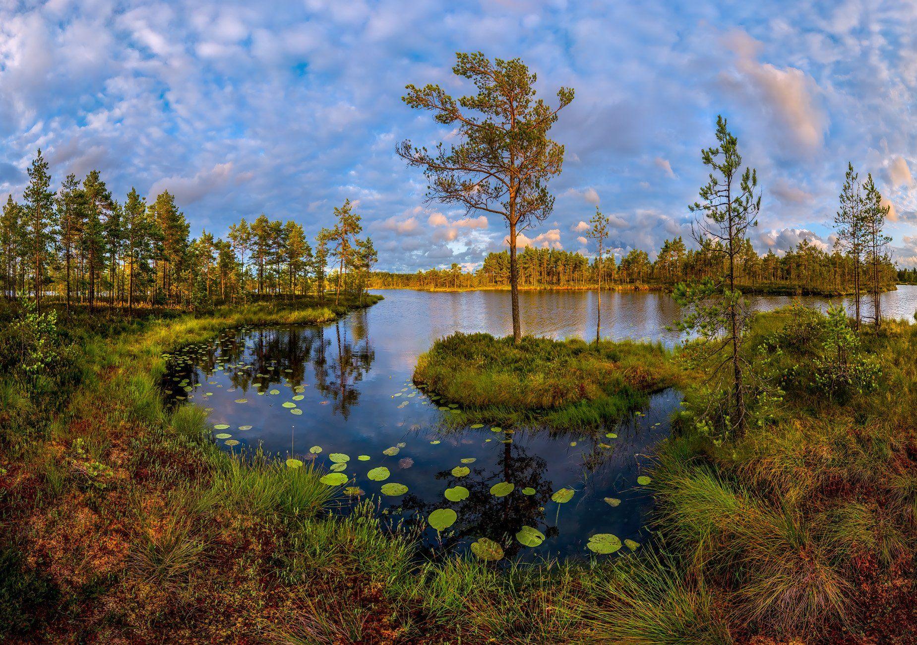 ленинградская область, болото, сосна, остров, озеро, закат, кувшинки, отражение, облака, мох., Лашков Фёдор