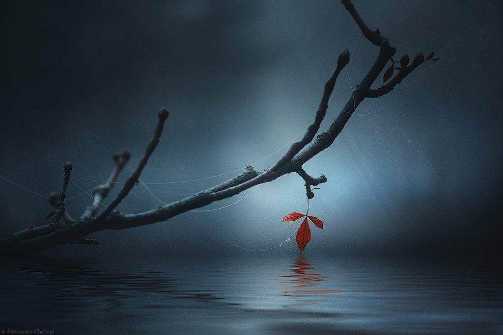 украина, коростышев, лето, лес, красота, макро, макро мир, природа, макро-красота,, Александр Чорный
