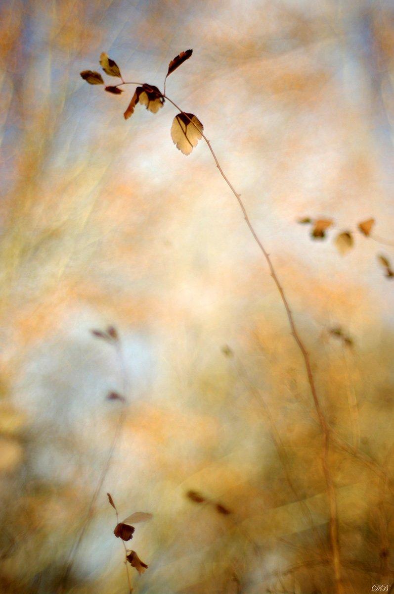 nature, leaf, leaves, brown, branch, color, colors, color image, image, photography, bokeh, macro, autumn, close-up, light, morning,, Dr Didi Baev