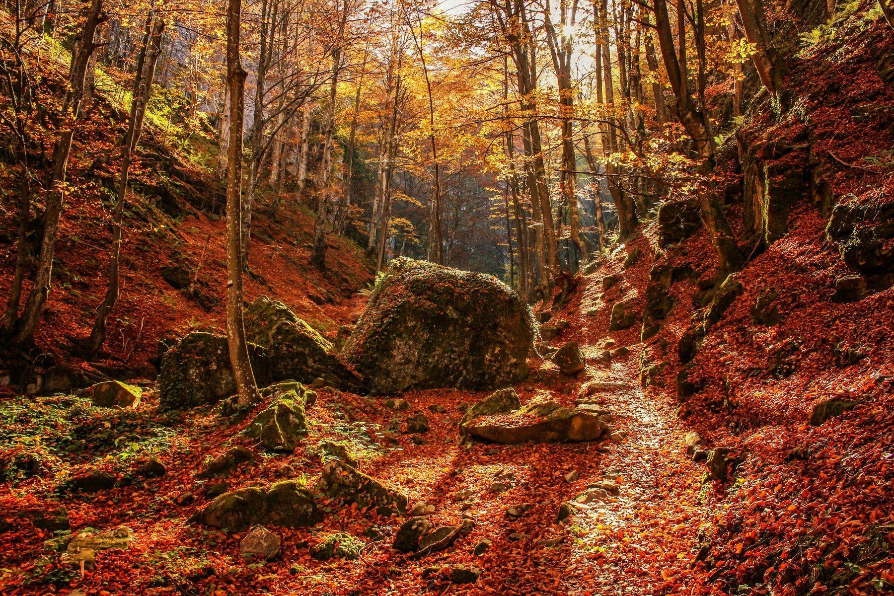 Welcome to Narnia Bistra Stoimenova