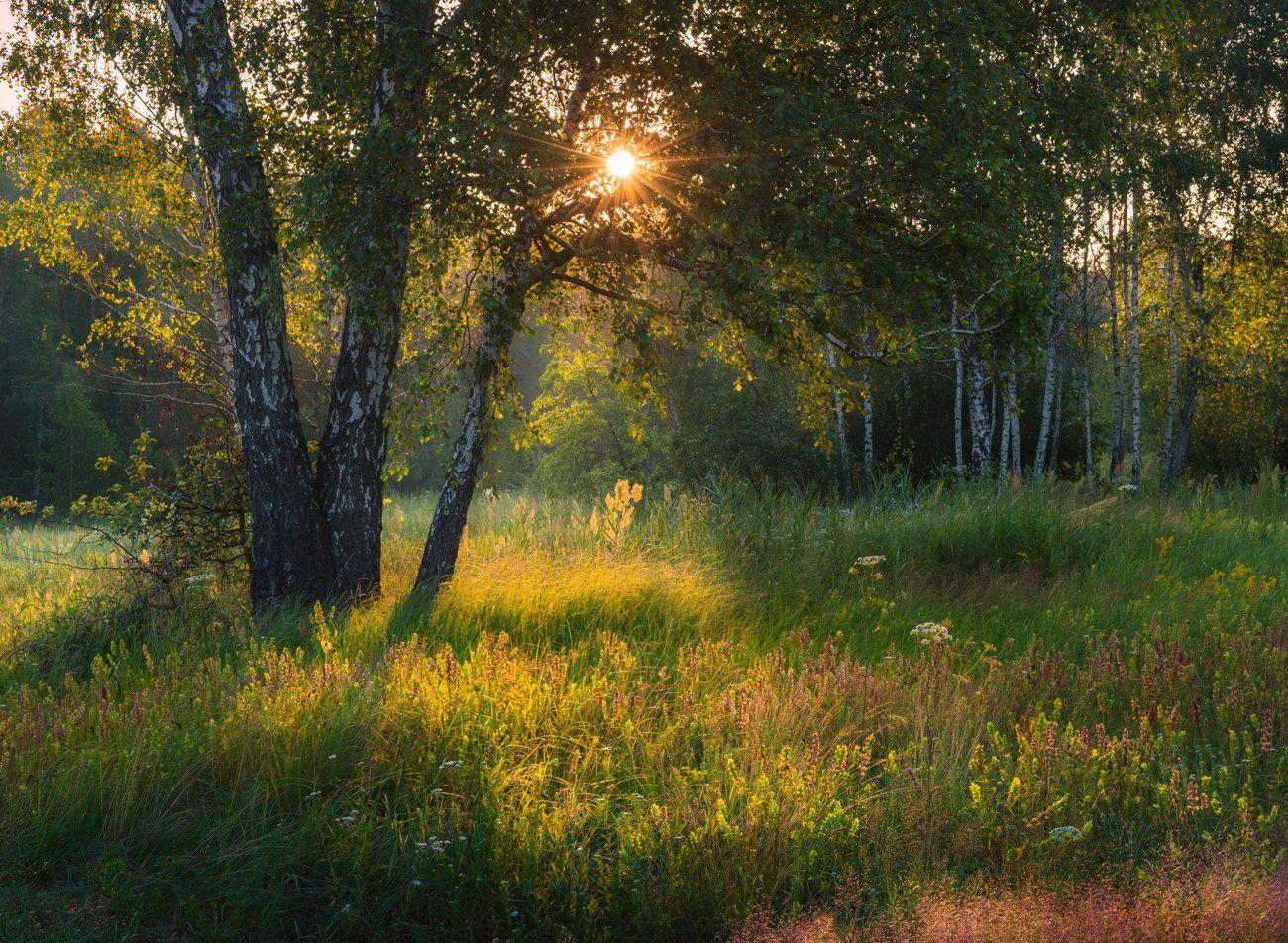 лето, июнь, луг, рассвет, Галанзовская Оксана