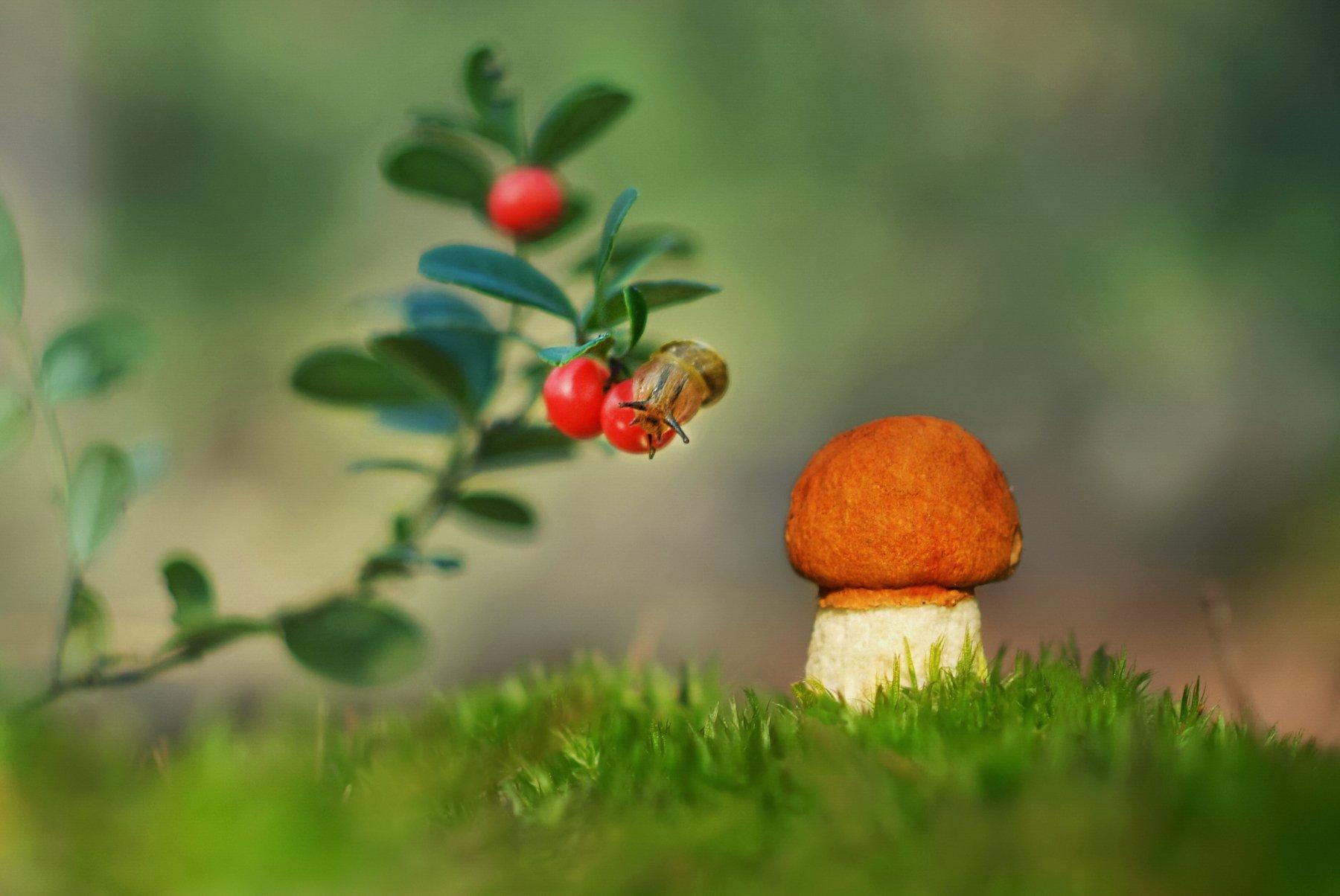 грибы, природа, Александр Гвоздь