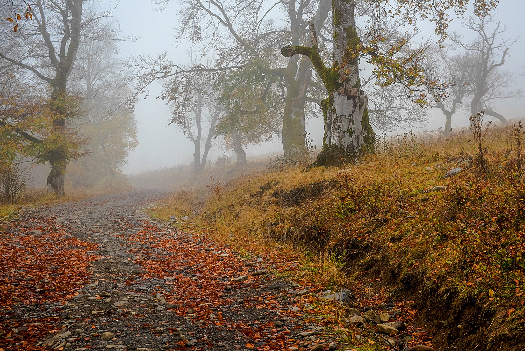 грузия, осень, бакуриани, лес, туман, Владимир Штыриков