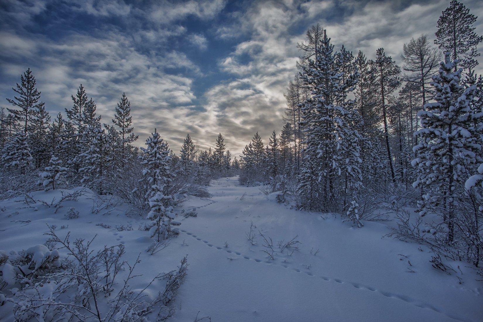 зима, якутия, нерюнгри, Евгения Левина