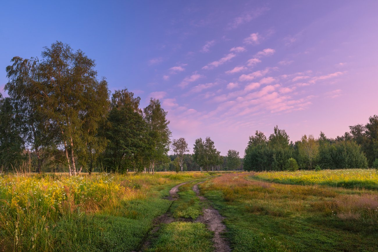 лето, луг, утро, Галанзовская Оксана