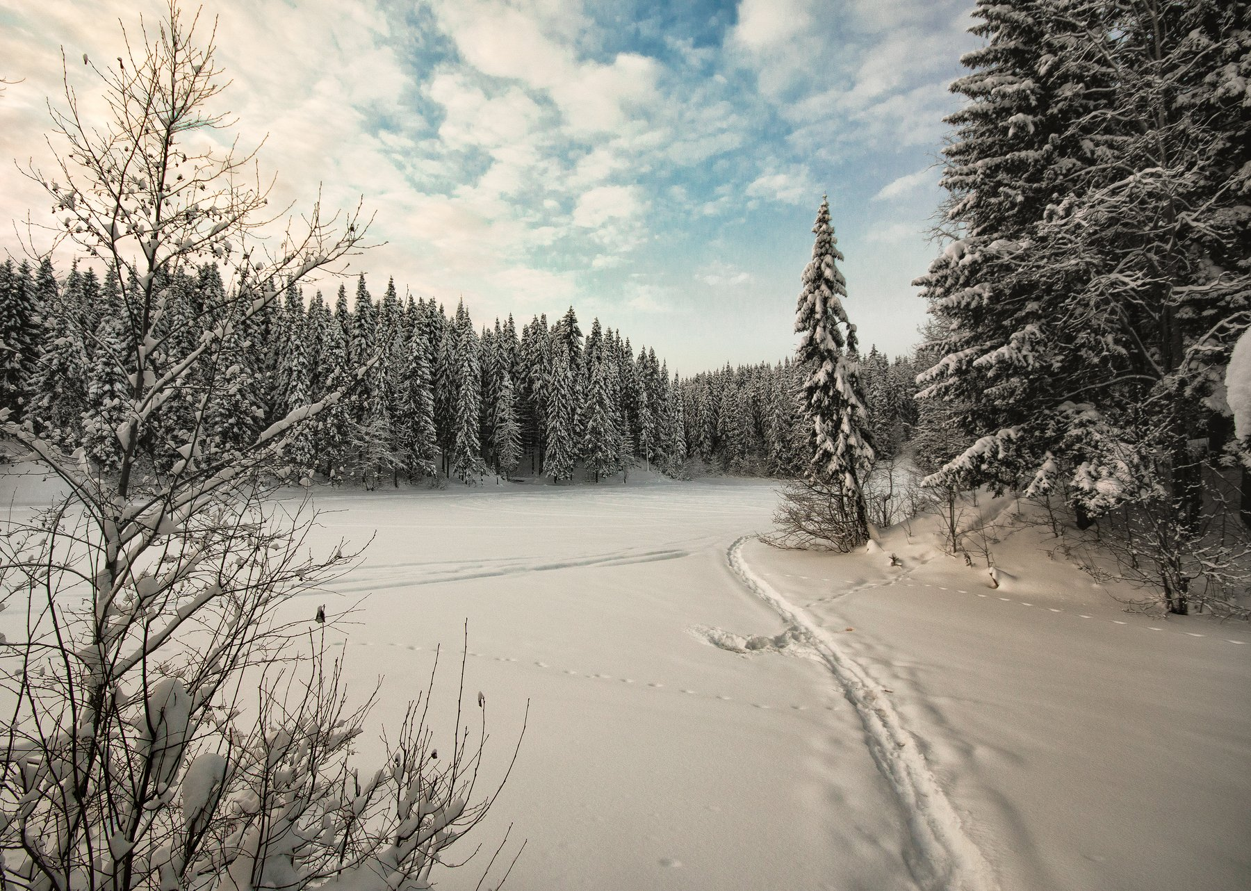 зима,холод,сказка,тишина, Карепанов Евгений