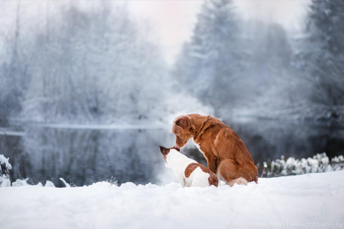 собака, зима, природа, Анна Аверьянова