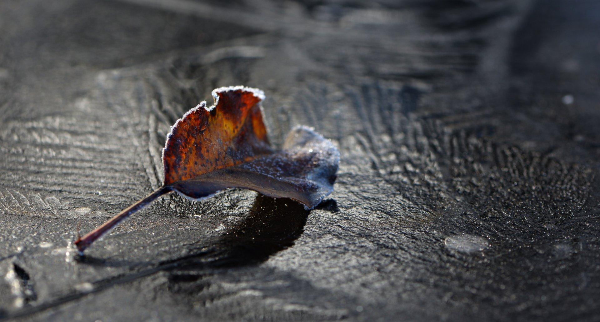 природа, макро, зима, опавший лист, лед, Неля Рачкова