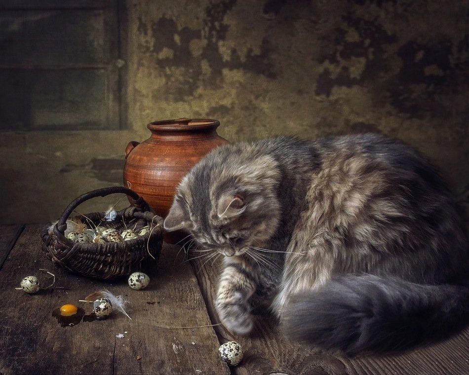 фото, кошка масяня, корзина, перепелиные яйца, Ирина Приходько
