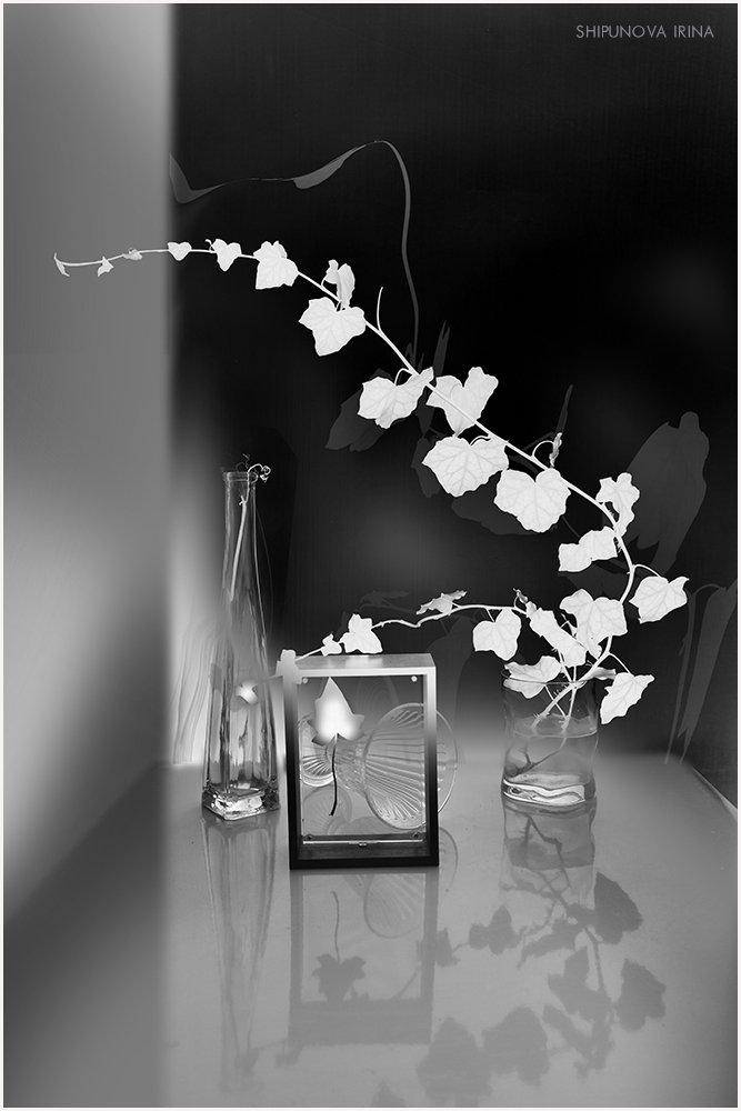 плющ стекло рамка black & white art, Шипунова Ирина