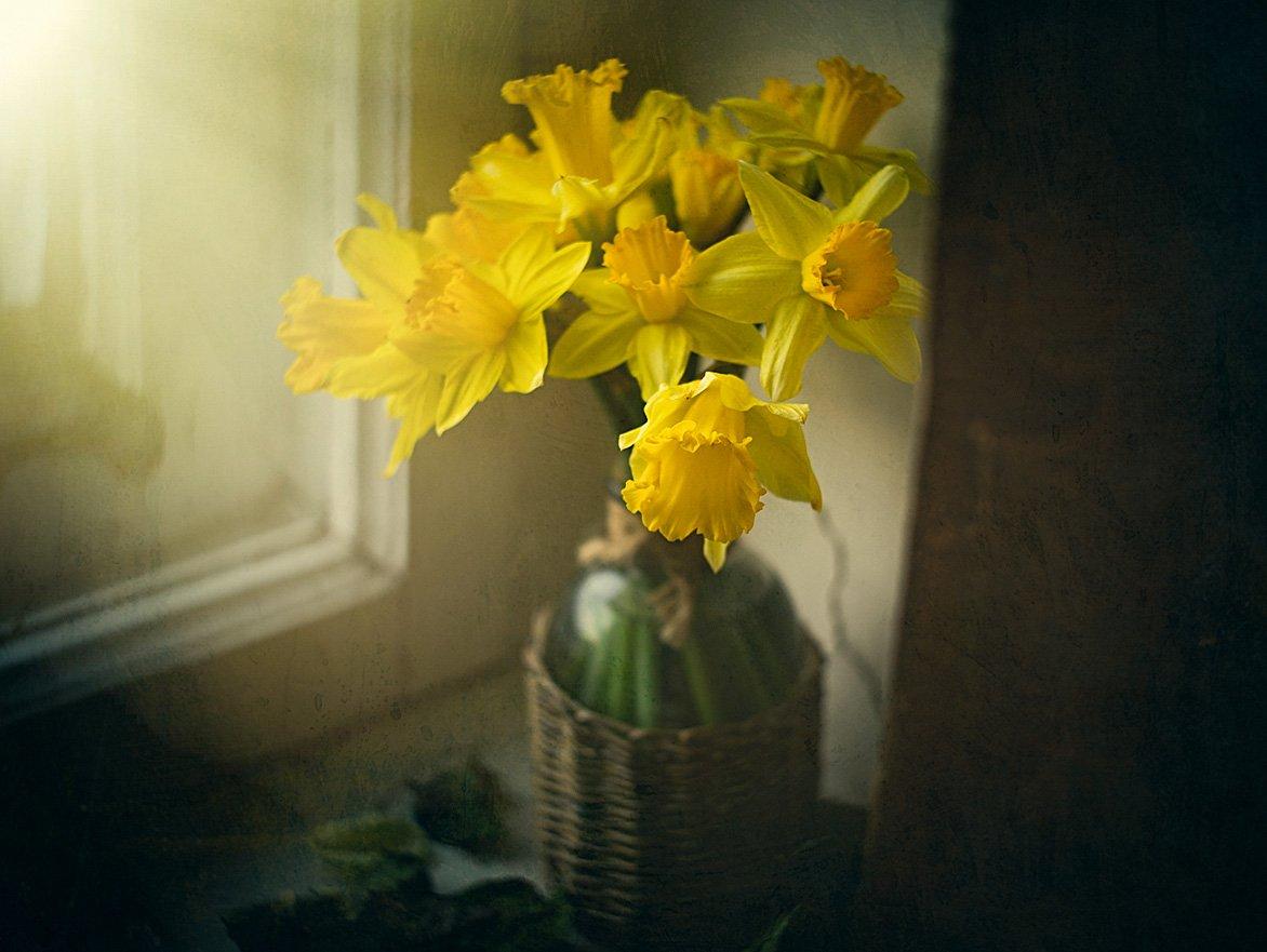 нарцисс, цветок, цветы, весна, окно, свет, занавеска, желтые, Игорь Токарев