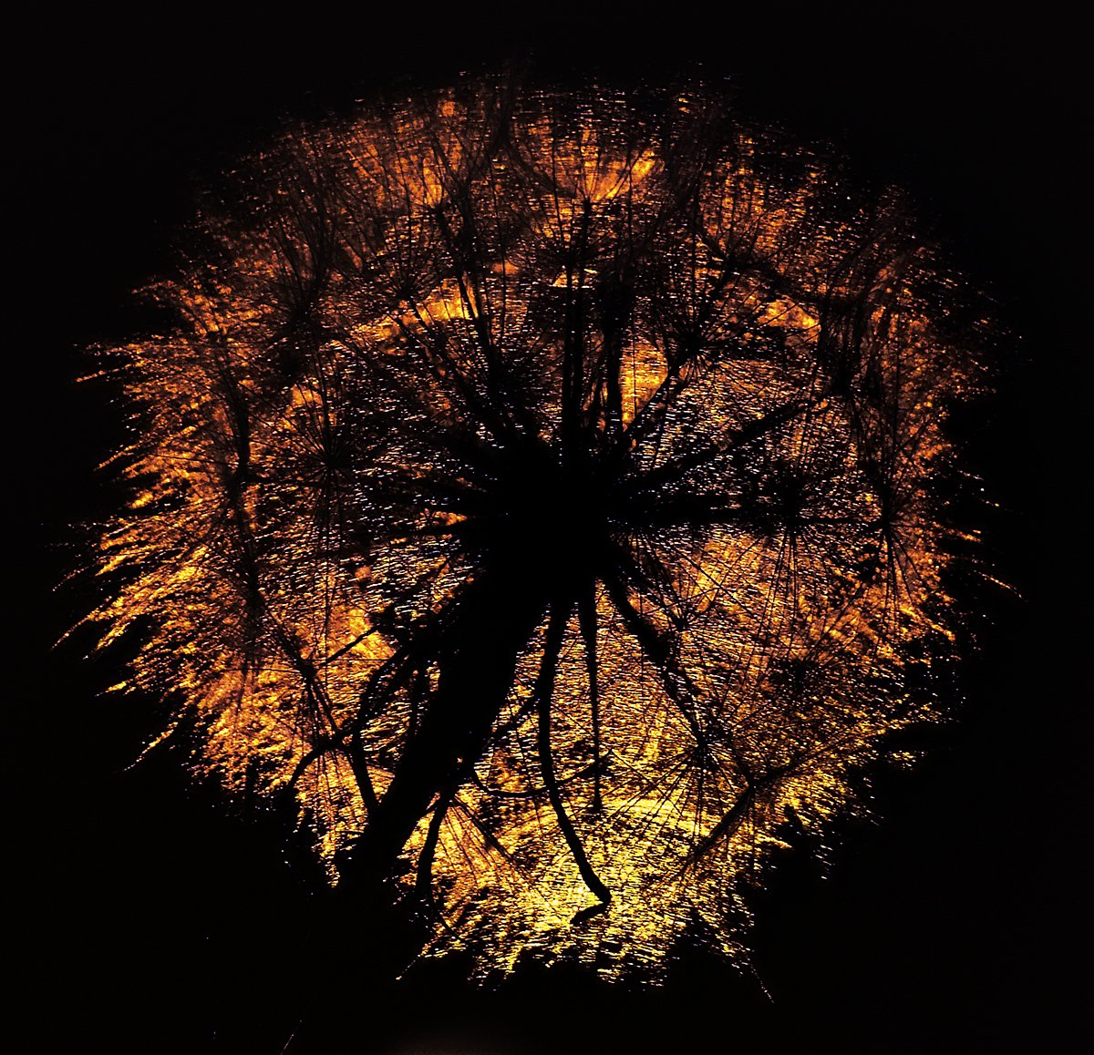wake,macro,dandelion,light,sony,eleven,, Emerald Wake ©