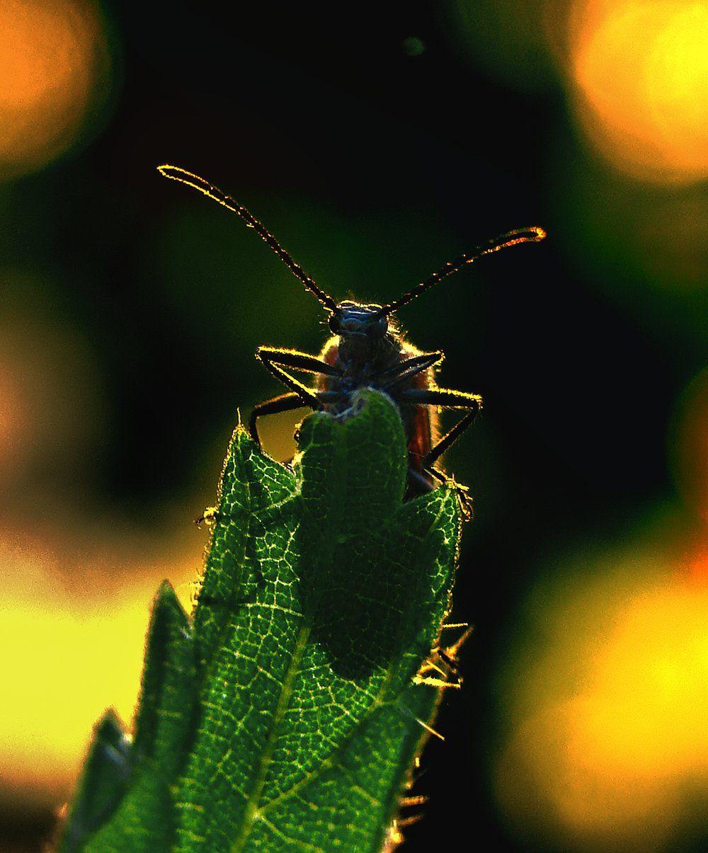 wake,macro,sony,summer,rain,alone,, Emerald Wake ©
