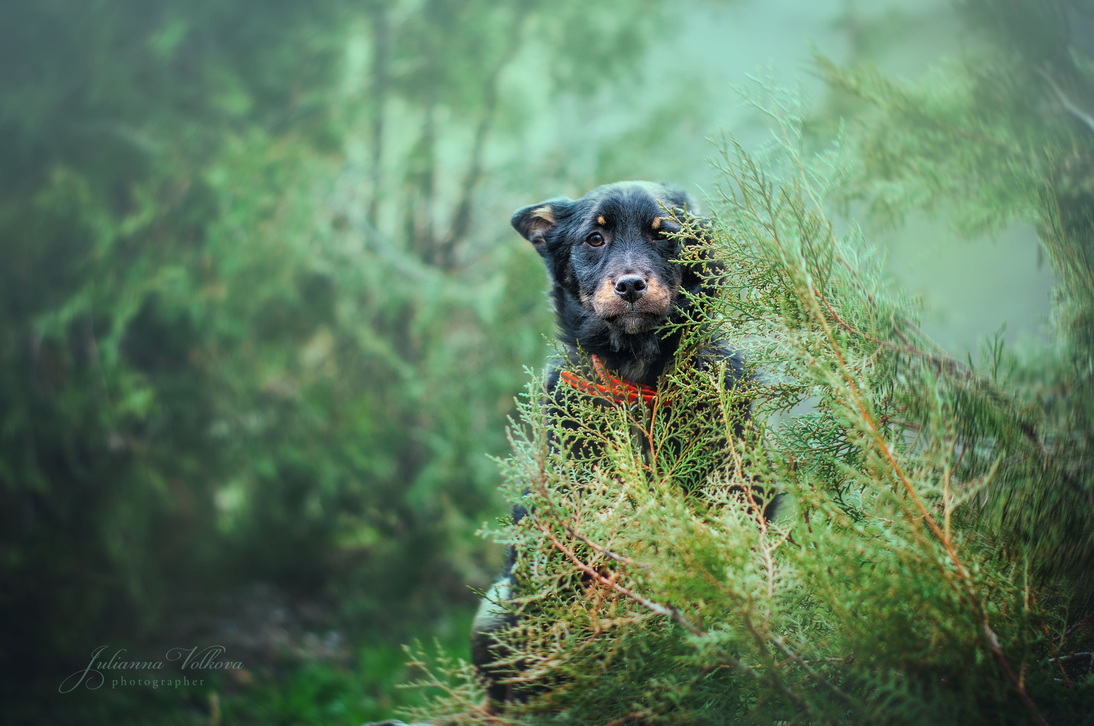 собаки,щенки, фотограф-анималист, природа, животные, Волкова Юлианна
