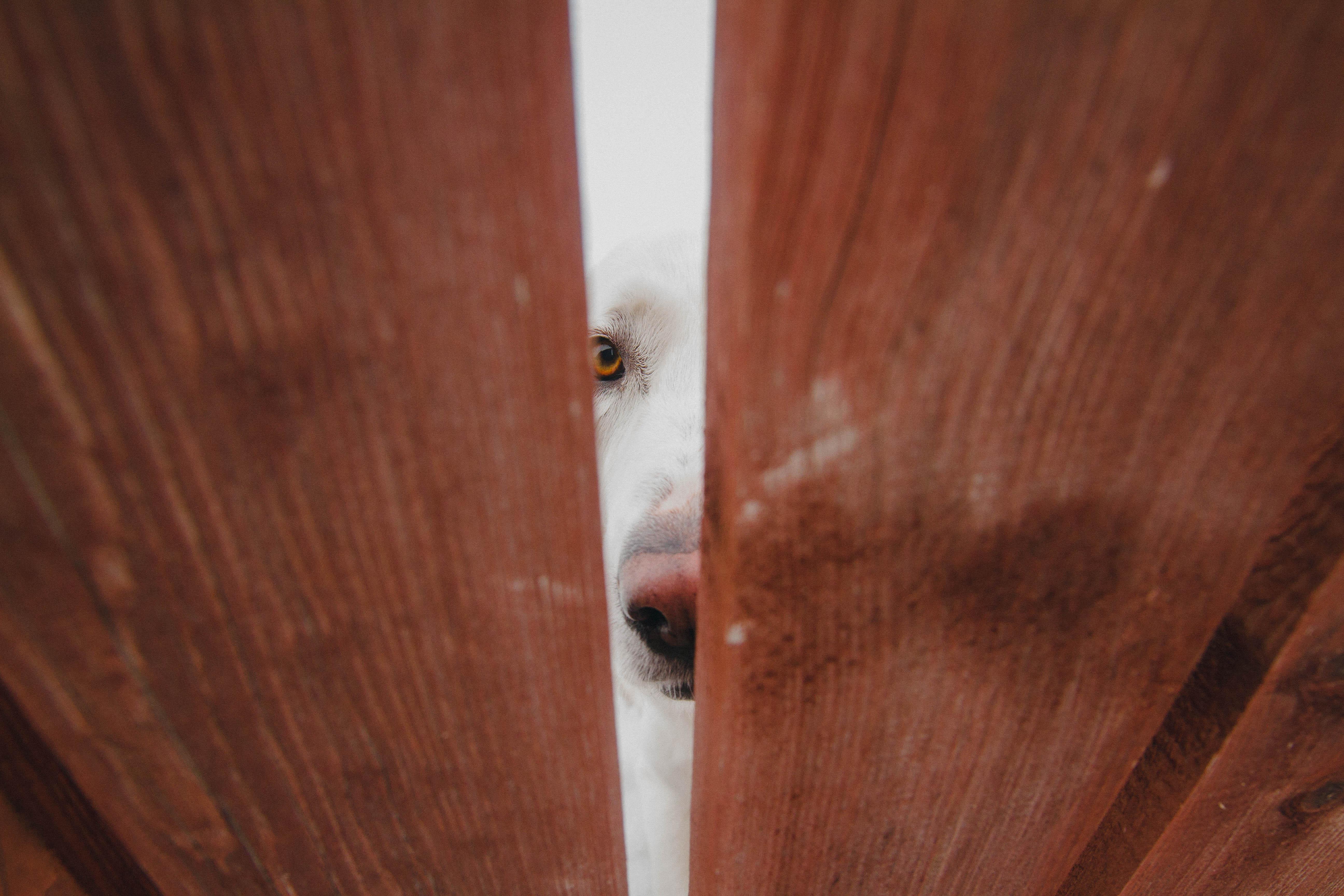 собака пёс деревня зима забор, Воронин Вова