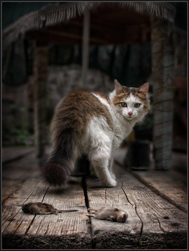 кот, кошка, добыча, владимир